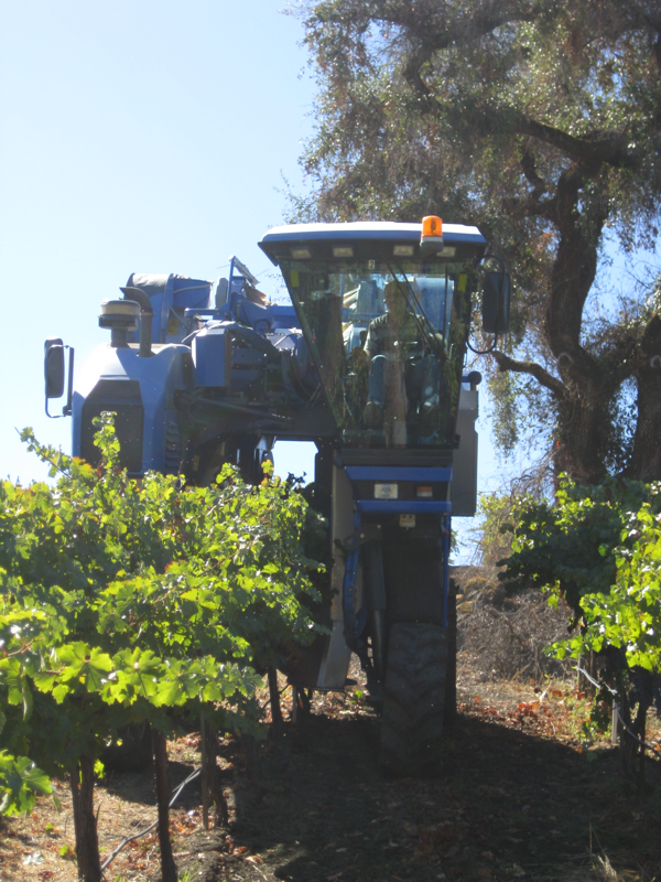 Mechanical grape and olive harvesting