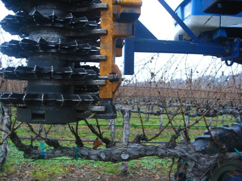 Jan-march 020 pruning